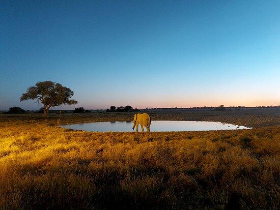 Etosha National Park Photo