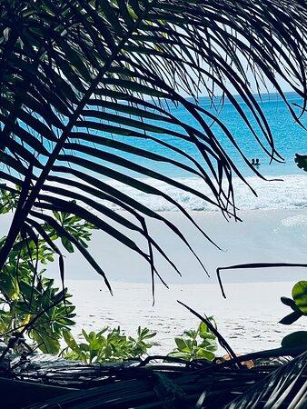 Isla Praslin, Seychelles: Endroit magnifique, eau cristalline et grosses vagues incroyables.