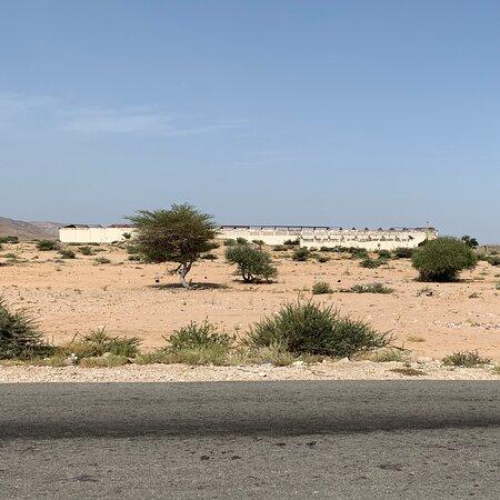 Berbera cement factory   Raw Limestone pile