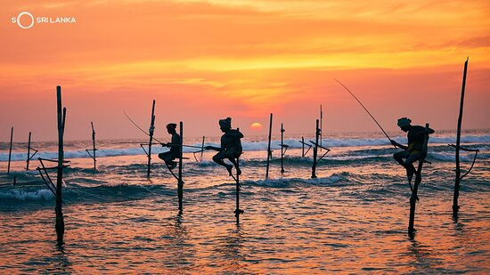Galle, Sri Lanka: The stilt fisherman's heels are ridged, their patience is rock solid, sweat trickles down their faces and into the salty water below. But they will not move until they have their catch. . . . #StiltFishing #SoSriLanka #VisitSriLanka #ExploreSriLanka #SriLanka #Sunsets #SriLankaTravel