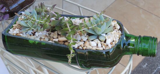 cut bottle used as a planter