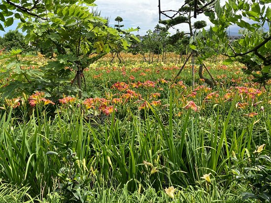 Guardian Flower Field