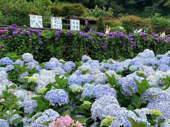 大梯田花卉生态农园