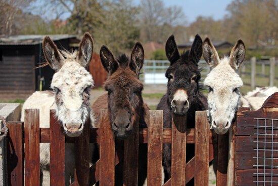 Brockenhurst, UK: Meet our donkeys!