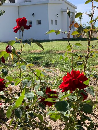 Albardon, Argentina: Exterior Jardines