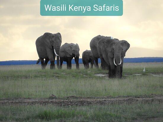 Amboseli National Park, Kenya: African elephants