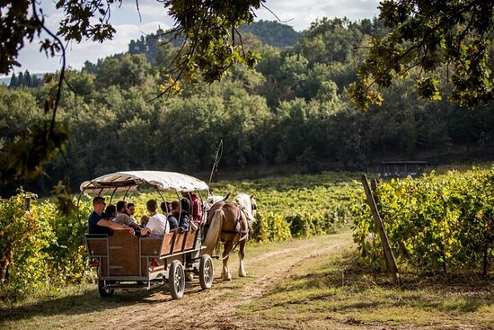 Carriage tour through the vineyards with wine tasting in Umbria