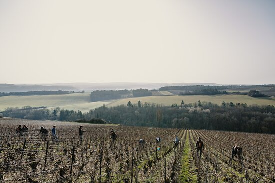 Les Riceys [Lay Reesay] preserved area shows the greatest biodiversity in Champagne