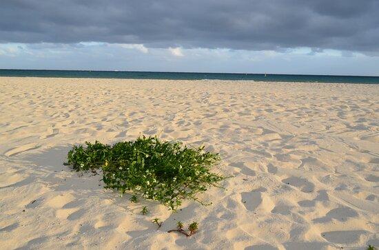 Memories of Mexico, Playa Del Carmen