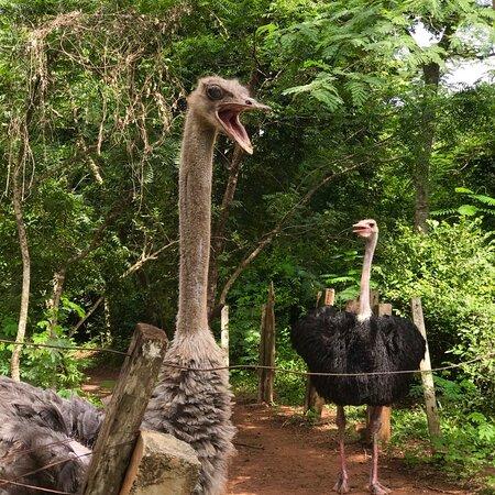 Achimota, Ghana: Niinns Ventures Day Tour visit to acca zoo Tap niinnsventures.com to join the tour call +233243132337  Tour Ghana With Us