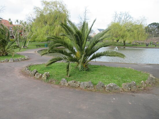 Palm tree by Victoria Park, as seen on Sunday 14th April 2019.