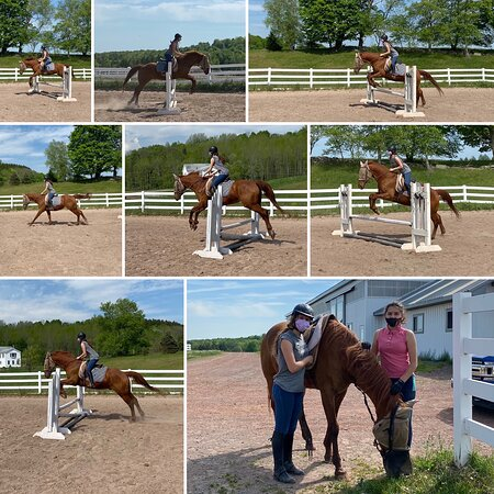 Bridle Hill Farm - Anthony Tassi 🐴 GP Riding Package Private Lesson 5_20_2021