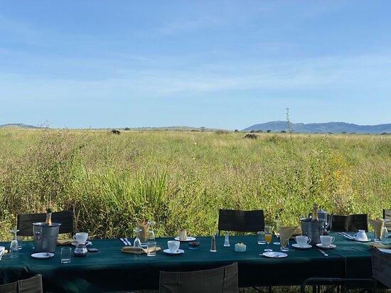 Serengeti Balloon Safari: Note the Cape Buffalo in the distance