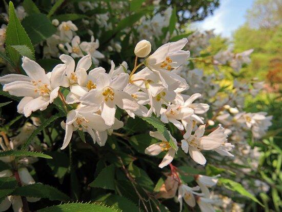 Spring Time in Cross Estate Gardens