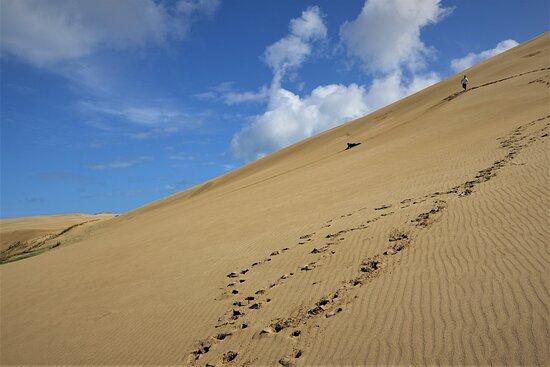 Pukenui, New Zealand: Te Paki Sand Dunes