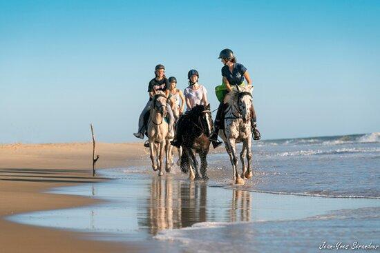 La Palmyre-Les Mathes, France : Balade à cheval sur la plage de la Côte sauvage, depuis l'Espace équestre du Marais de Bréjat