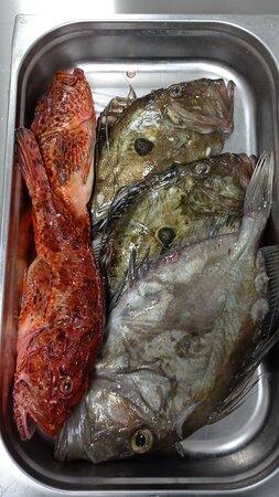 Uvijek svjeza riba iz naseg ulova!  Always fresh  fish from Adriatic sea!