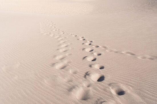 Looking Back at My Tracks