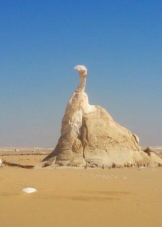 4-Day White Desert Camping Trip from Cairo: White Desert - Peacock - 2017