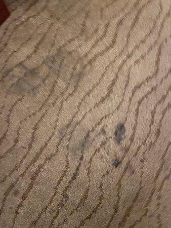 Filthy carpets