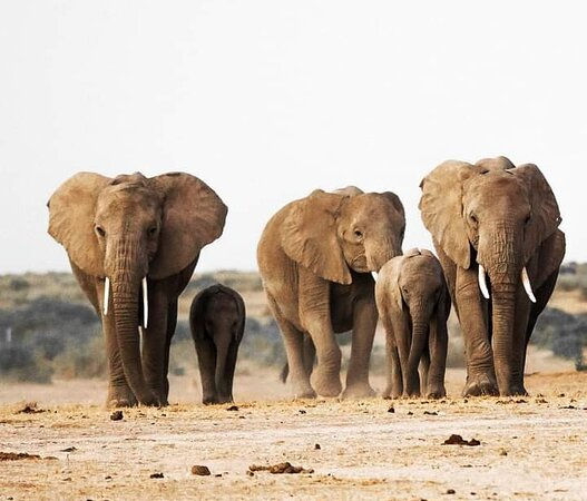 Day trip from Arusha to Tarangire national park,this park is famous for wildlife Elephants,lions,leopard, and other ungulates is located 118 km from arusha town l,this park is also has the beautfully Escapement