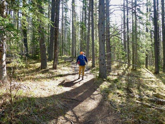 Coliseum Mountain Trail