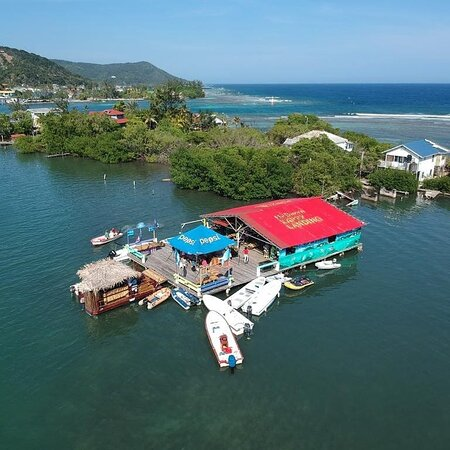 Roatan, Honduras: new addition to our company. @mr.brownhappylanding