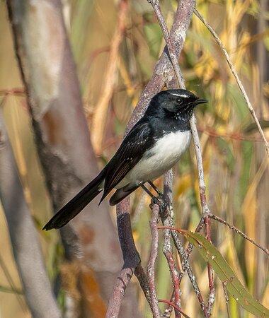 Unknown bird ?