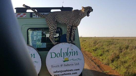Dolphin Tours & Safaris