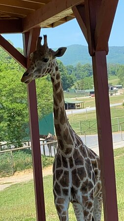 Great time at Virginia safari park
