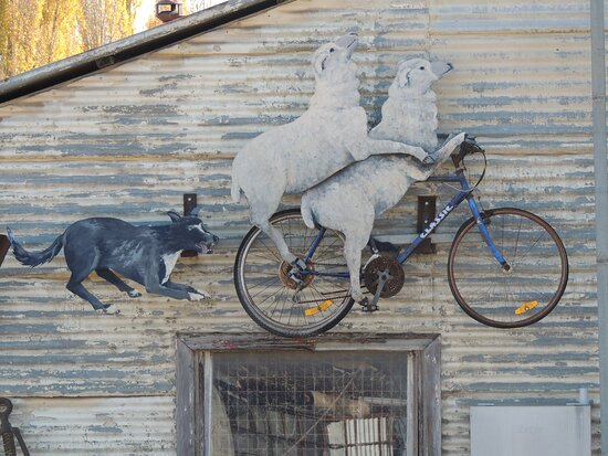 Molong, Úc: Animals on bikes in town