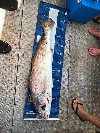 Darwin, Australië: Length of Jewfish