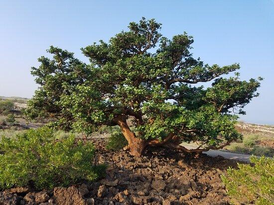 Waikoloa Dry Forest Initiative