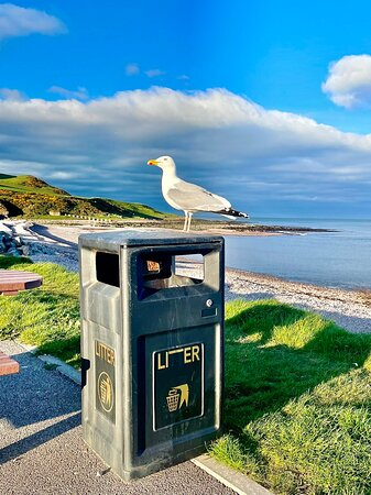 Inverbervie, UK: The sharp-eyed bin attendant.