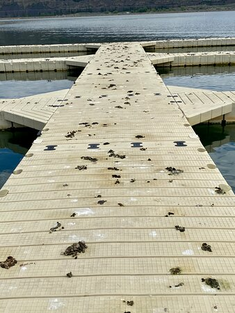 Shitty docks