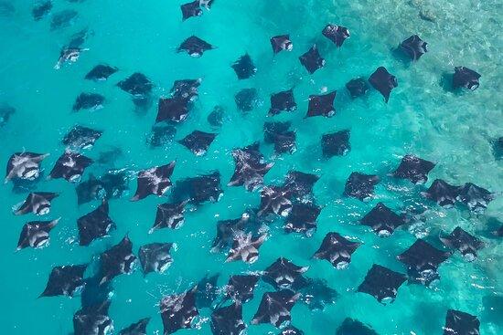 Fonimagoodhoo Island Photo