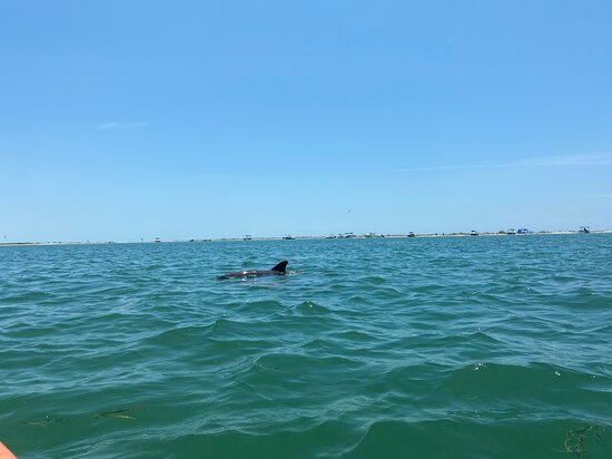 Pops Paddle Board And Kayak Rentals
