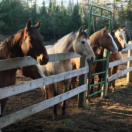 Grassy Creek Ranch