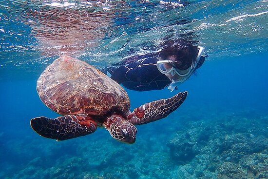 Snorkeling Tour to Swim with Sea Turtles at Yakushima Island
