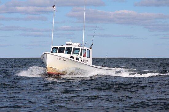 Bad Dog Fishing Charters