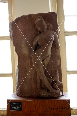 Nayika , a part of  panel  Ruined stage Fine carved artefact's /sculpture 10th  Century. Rani Durgawati Museum , Jabalpur, M.P. India