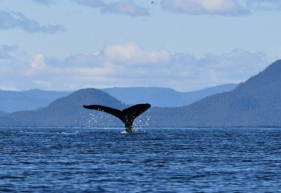 Ketchikan Kayak Eco-Tour: whale tale