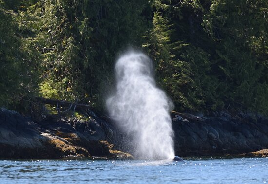 Ketchikan Kayak Eco-Tour: There she blows!