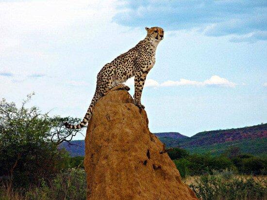 Sogno Africano Safaris