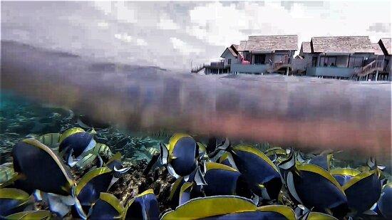 waterpool villas