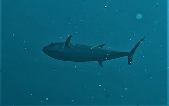 diving excursion