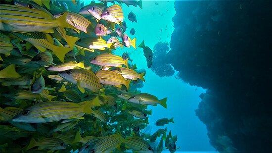 diving excursion KudaRah