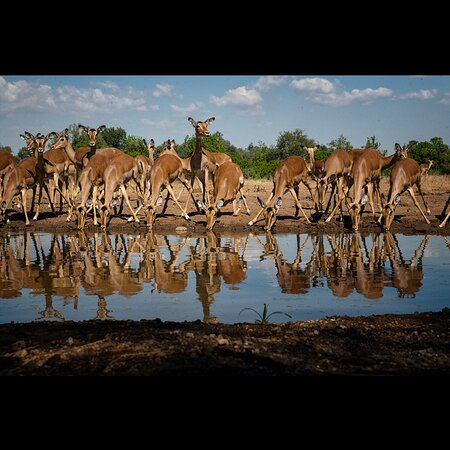 Mashatu Game Reserve, Botswana: A shpt taken from photomashatu hide