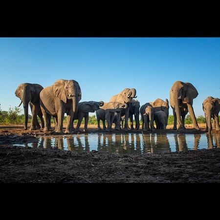 Mashatu Game Reserve, Botswana: Elephants from PhotoMashatu hide