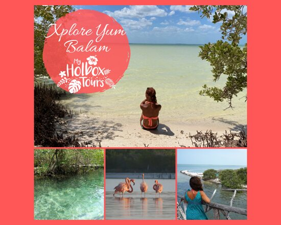 One of the best tour in Holbox : Xplore Yum Balam. 3 and a half hour to discover the nature around the island.